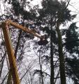 Pielęgnacja drzew. Prześwietlanie koron. Rębakowanie gałęzi.