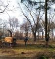 Prace porządkowe po przycince drzew. Rębakowanie gałęzi.